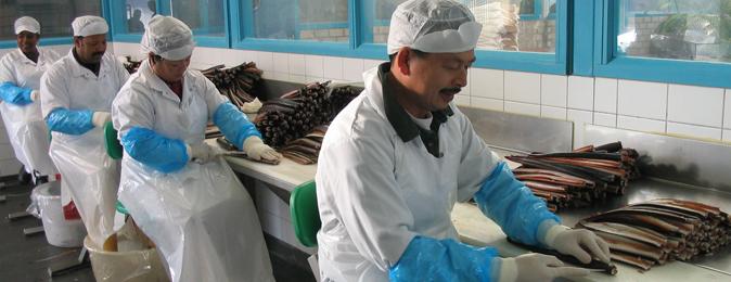Traysealer voor palingrokerij vlug